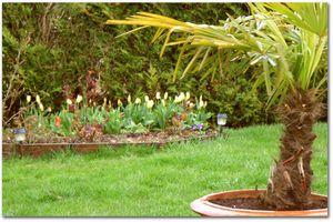 tulipe_2.jpg