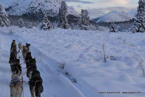 Iditarod-0049--3-.JPG