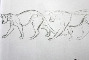 chats-steinlen-009.JPG