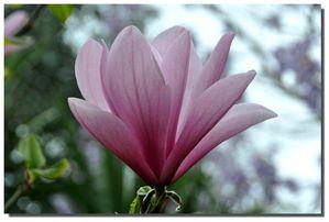 Jardins-ANS-2013-05-0168