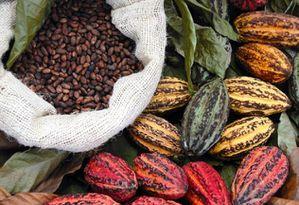 Cacao-Cemoi.jpg