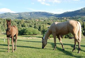 chevaux-ranch-utah.jpg