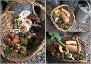 panier champignons chataignes courges automne