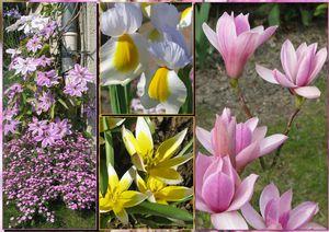 2011-05-05-fleurs-de-mai.jpg