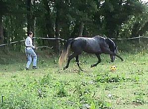 Cheval liberté jeu 44 Copyright : Techniques d'élevage