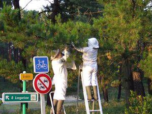 Récuperation abeilles