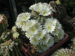 Cactus-a--2-.JPG