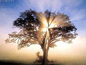 Bel arbre 21
