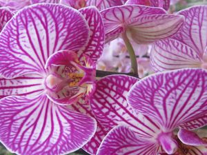 orchidees-clodelle-IMG_3064.JPG
