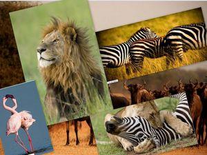 mosaique-Afrique-sauvage-red.jpg