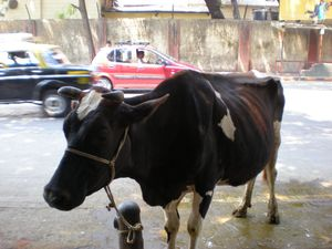 Bombay-001.jpg