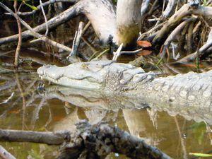 2--crocodile.JPG