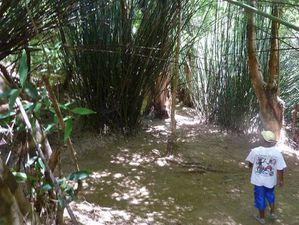 réserve Nahampoana 05