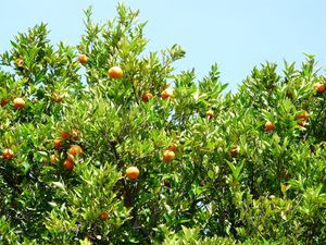 10 Oranger