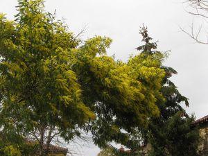 Cassagne-fleurs-03.11-7529.JPG