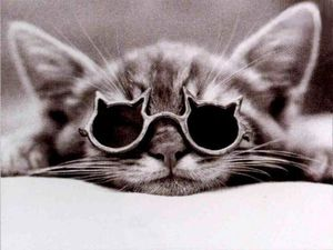 chat-a-lunettes.jpg