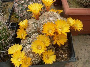 Cactus b (2)