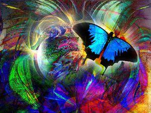 papillon789