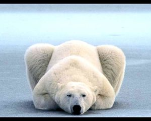 large_ours-blanc-1280x1024_139ac8.jpg