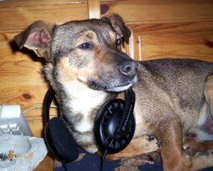 music-cuffie-headphones-1719334-l.jpg
