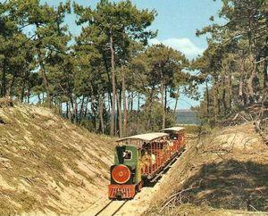 train-foret.jpg