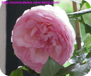 cadeau fete des meres 2010 fleur