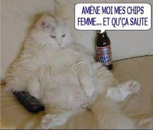 humour-chat-cool-img.jpg
