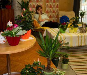 14-Vanessa-Gabel-Zimmerpflanzen-der-70er-2-Kopie-1.jpg