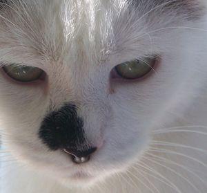 Babette--Toto--Moi-004.jpg