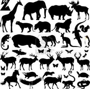 12862302-silhouettes-de-nombreux-animaux-de-zoo-illustratio.jpg