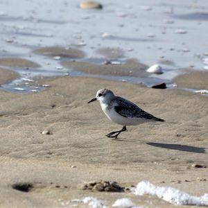 grande-plage-toussaint-oiseaux-125.JPG