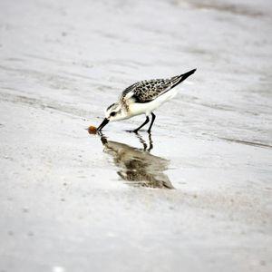 oiseaux-village plage 052