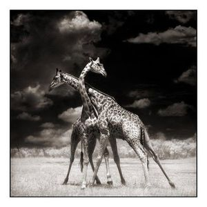 picture by Nick brandt23