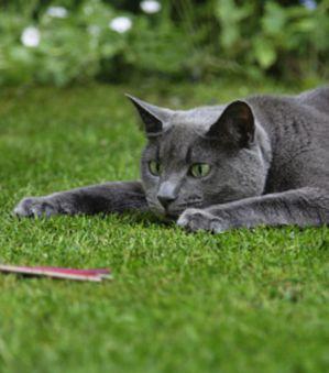 les-chats-devraient-etre-ecartes-pour-sauver-les-oiseaux-de.jpg