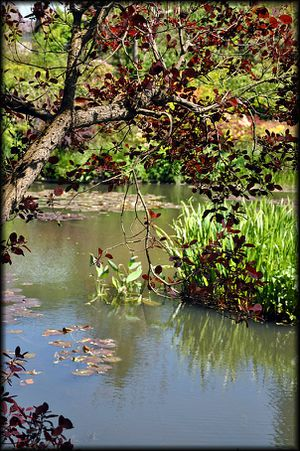 Giverny---Le-Jardin-de-Claude-Monet-30a.jpg