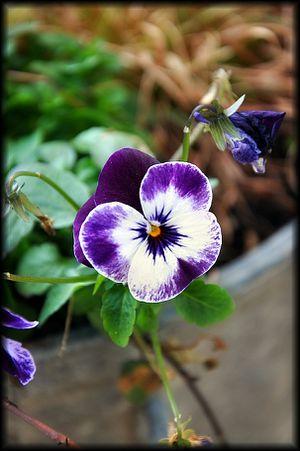 Fleurs-du-jardin-4a.jpg