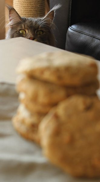 chat maine coon cookies