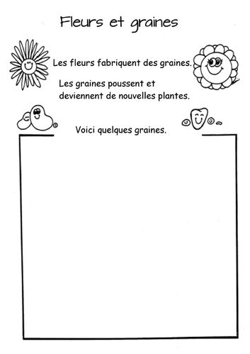 fleurs-et-graines.jpg