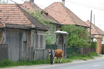 La Transylvanie ; pays de Dracula, des Saxons et des Sicules (Voyage Roumanie) 21