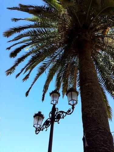 rues-seville-palmier.jpg