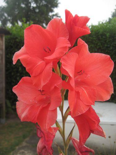 fleurs-0165.jpg