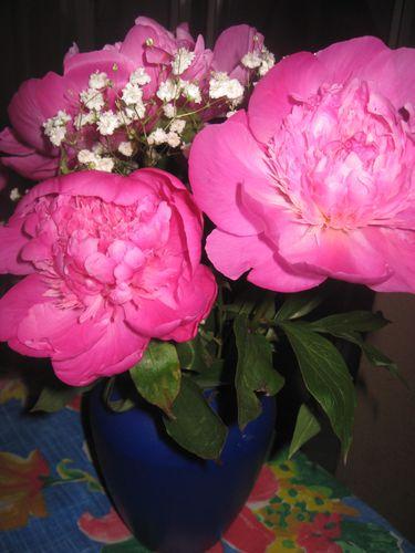 fleurs 7913