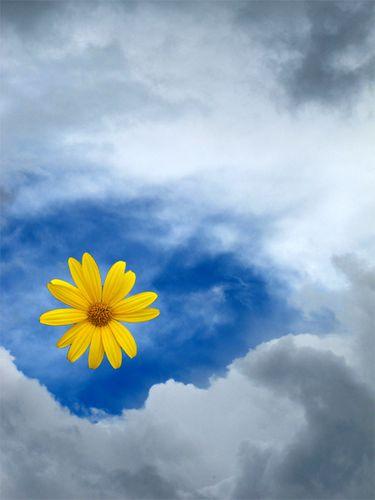 Fleur-dans-le-ciel.jpg