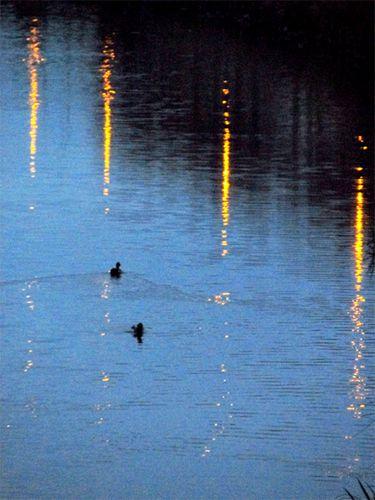 Canards-sur-le-canal-de-Lunel.jpg