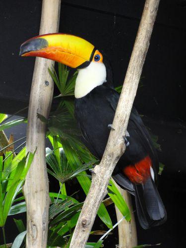 toucan_parc-des-oiseaux.JPG