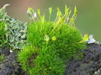mousses-lichens.jpg