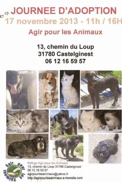 Chien chat 1