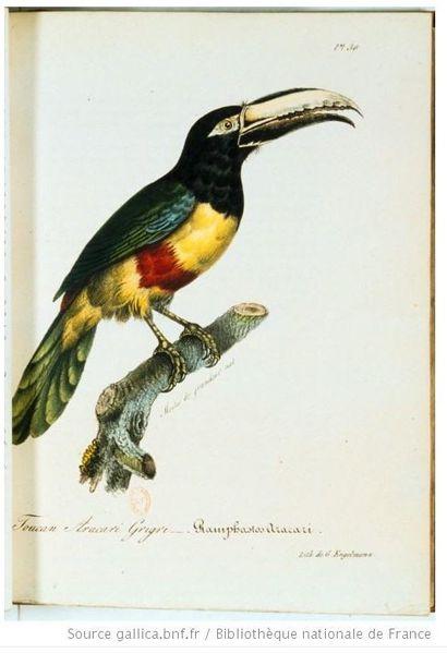 oiseaux5
