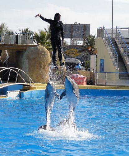 spectacle-dauphins-3-marineland.jpg