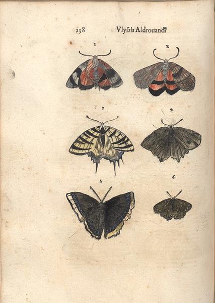 Aldrovandi papillons p.238